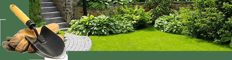fresh cut lawn