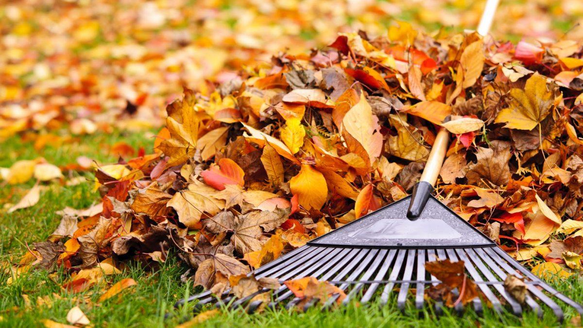 winterizing your lawn